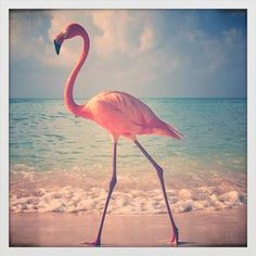Fridaynight = Flamingo Party Night!