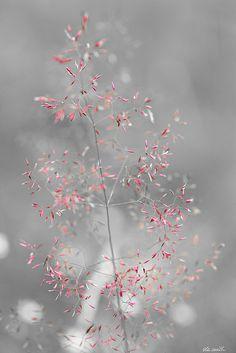 grass by ola smith, via Flickr
