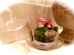 Tiny Terrarium made out of Ring Box, moss and fungus from woods and gnomes and mushrooms made out of FIMO!