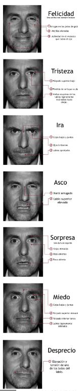 Emociones y expresiones faciales universales Tim Roth, Spanish Class, Teaching Spanish, Warren Buffett, Lie To Me, Ideas Para, Steve Jobs, Emotional Intelligence, Facial Expressions