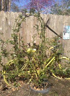 rose trellis on pinterest flower garden plans climbing rose trellis plans free woodworking projects amp plans