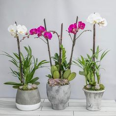 Orchids and succulents, yes please. Gift one to Mom this Mother's Day.⠀  Link in bio. ⠀  #rogersgardens #beautyinliving #mothersday