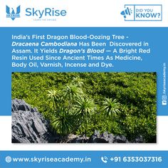Dragon Blood, Resin Uses, Online Coaching, Incense, Did You Know, Medicine, Herbs, India, Bright
