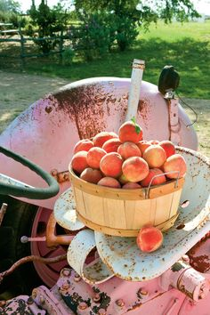 9. Pick Peaches - 16 Adventures in Texas' Hidden Hill Country - Southernliving. You'll have to wait a while—the first peaches don't ripen until the end of May—but it's worth it to taste a sweet Hill Country peach plucked fresh from a tree at Marburger Orchard, 830/997-9433, near Fredericksburg. Gary Marburger grows 13 varieties that ripen in stages until early August. Can't wait till then? Strawberries!