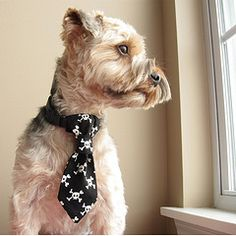 How cute is a dog tie