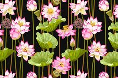 Collection of 4 high detailed seamless patterns with lotus flowers and leaves Collection includes 4 AI files and 4 rasterized copies px. Saree Painting, Lotus Painting, Kerala Mural Painting, Lotus Flower Art, Lotus Art, Abstract Flowers, Shiva Art, Krishna Art, Lotus Kunst