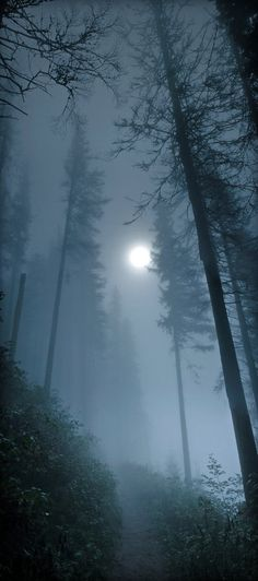 Foggy Moonlit Forest