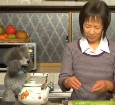 Cooking With Dog on Youtube  She shows you step by step how to prepare Japanese food.  The dog narrates in English!