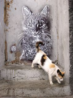 C215 - Casablanca street art 000 cat