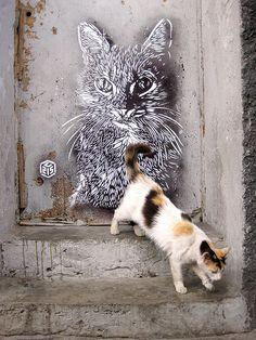 C215 - Casablanca street art 000 cat