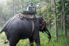 Elephant and rider in Pench National Park. All photos by James Sturz. | Tyger! Tyger! | FATHOM Travel Blog and Travel Guides
