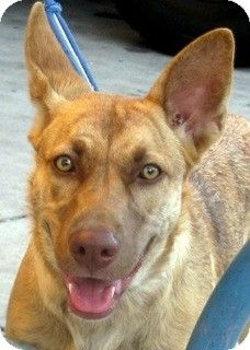 SUMMER is the perfect dog looking for the perfect home! She is great with all dogs & all people! ADOPT SUMMER!