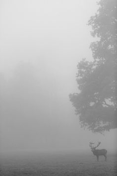 in a fog but i still see beauty Wild Life, The Great Outdoors, Wilderness, Nature Photography, Fishing Photography, Beautiful Creatures, Scenery, Images, Beautiful Places