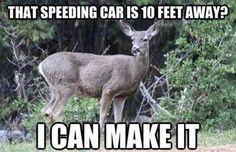 "deer hit my car ""That speeding car is 10 feet away? I can make it"" Deer Meme - Google Search"