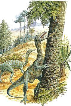 Carnivore --- Site officiel : http://www.dinosauria.ca/
