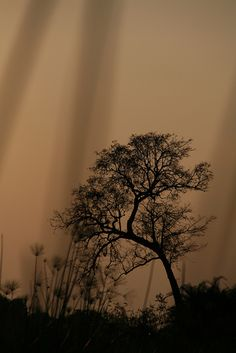 Tree, Okavango Delta Botswana, by Tracy Sparkes