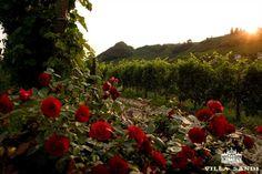 Expo Veneto: Spring in Villa Sandi - Events