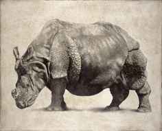 Indian Rhinoceros II / Rhinoceros unicornis / 2007 / 80 x 100 cm / Pencil on panel Animal Sketches, Animal Drawings, Red River Hog, Asiatic Lion, Tiger Ii, Indian Elephant, Rhinoceros, Pencil Portrait, Animal Kingdom