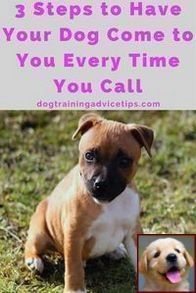How To Train A Dog Not To Jump On U And How Do You Teach Your Dog