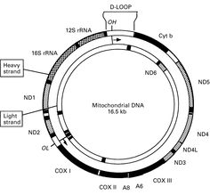 Pin by Joy Z on My future with Mitochondrial myopathy