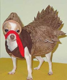 Thanksgiving Doggy