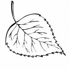 Image Result For Leaves Drawing Fall Coloring PagesLeaf