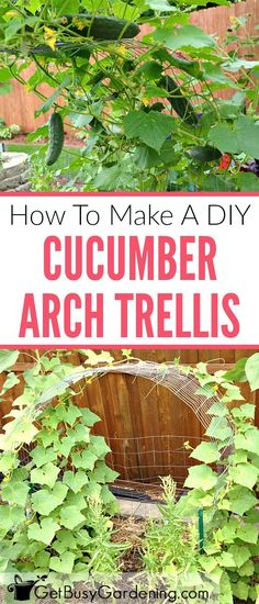 Growing cucumbers on a trellis saves space in the garden, and makes harvesting a breeze. Follow this step-by-step tutorial to make your own simple arch cucumber trellis.