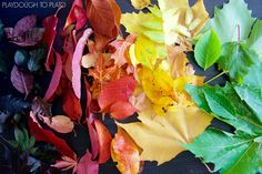 Gorgeous-fall-leaves-for-a-chromatography-science-experiment.-Such-a-fun-fall-activity-for-kids.jpg (3318×2212)