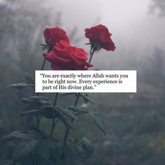 Each one of us is exactly where Allah wants us to be right now. Every experience. Every trial. Every emotion is part of His divine plan. Towards the future that only He can see. May He bless this journey with barakah, mercy and love. Quran Quotes Inspirational, Quran Quotes Love, Allah Quotes, Muslim Quotes, Religious Quotes, Islamic Qoutes, Motivational, Quran Verses About Love, Hadith Quotes