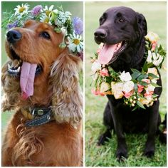 You can even make a flower crown for your pet!