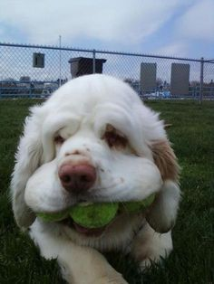 I don't share my tennis balls.