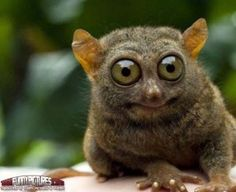 Funny-Animals-with-Big-eyes-4 -