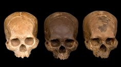 OMG these skulls are actually made out of chocolate! They look like real!