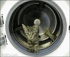 lavadora rueda para gatos
