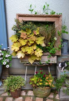 飛び出す絵本みたいな額縁アート Container Plants, Container Gardening, Outdoor Plants, Outdoor Gardens, Succulent Gardening, Rustic Gardens, Garden Features, Garden Care, Diy Garden Decor
