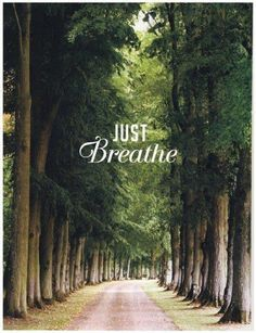 """And all I need to do is just breathe. Just breathe a prayer of thankfulness, for all You do. Just breathe a prayer of worship, an offering unto You. Just breathe a prayer, surrendering, """"Thy will be done"""" anew. Then all I need to do is just breathe. Motivation Business, Daily Motivation, Motivation Quotes, Motivation Inspiration, All Nature, Green Nature, Favim, Beautiful Words, Trees Beautiful"""