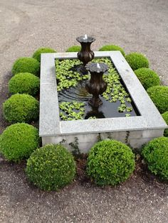 Fountain and boxwoods