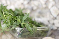 ~Mint leaves~