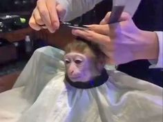 This monkey getting a haircut can be Photoshopped into any situation — and people are obsessed with it Stupid Funny Memes, Haha Funny, Foto Fails, Reaction Pictures, Funny Pictures, Funny Animals, Cute Animals, Response Memes, Mood Pics