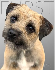 Dog Grooming Salons, Border Terrier, Luxury Spa, Dory, Photo Galleries, Gallery, Animals, Animales, Roof Rack