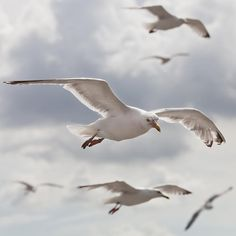 Seagulls. Clever, funny, amazing, beautiful, wild and wonderful birds.....and they only plop on the cars and heads of people who they KNOW have eaten their fish..........