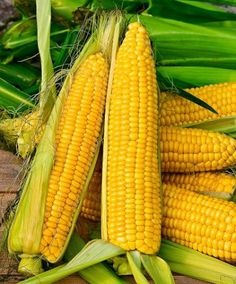 Sweetcorn 'Tasty Sweet' F1 Hybrid This sweetcorn is a super sweet delicacy with an excellent flavour! This early variety can withstand colder weather ensuring a more reliable harvest. This plant produces full cobs around 20 cm long that are delicious boiled or grilled.