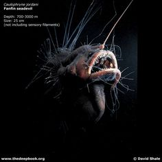 What lives at bottom of mariana trench mariana trench mariana the deep sea anglerfish sciox Image collections