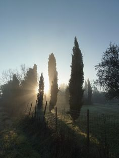 Sun and Cypresses