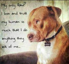 My Only Flaw is Ioving  my human so so so, much That, I do anything they say and ask of me......TRUE