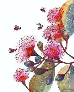 lamuffa:  Pink Flowering Gum by Teva