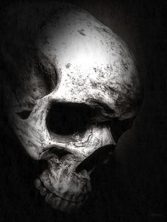 weathered skull