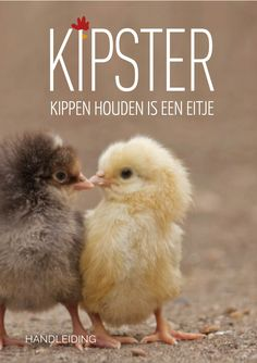 Kipster handleiding - kippen houden - PDF Met héél veel interessante én leuke…