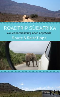 Road trip South Africa - from Johannesburg to . - Road trip South Africa – suggested route and useful tips - Wild Animals In Africa, Wild Animals List, Surfing The Nations, Roadtrip Europa, South Afrika, Adventure Bucket List, Surf Trip, Future Travel, Africa Travel