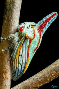 Oak Treehopper Treehoppers come in a multitude of strange forms and colors and seem otherworldly in comparison to most insects. Cool Insects, Bugs And Insects, Weird Insects, Beautiful Creatures, Animals Beautiful, Cute Animals, Reptiles, Mammals, Cool Bugs